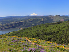 Coyote Wall Trail in WA (westernlandscapes) Tags: coyotewall trail columbiarivergorge washington pacificnorthwest hike gorge wildflowers balsamroot mounthood