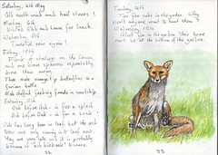 Fox (Hornbeam Arts) Tags: foxcubs starlings sparrows sketch watercolour