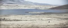 Take a walk on the wild side... (juanjo_rueda) Tags: masai africa ngorongoro safari wildlife landscape lake