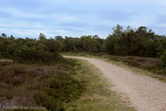 Heide01 (manfredkirschey) Tags: römö rømø insel dänemark nordsee nordseeinsel heide heidelandschaft