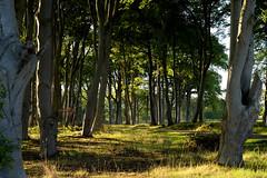 Sunset in the forest (lozinka_gergova) Tags: today sunny sunset forest forestlife outdoor outdoorphotography nature naturephotography landscape landscapephotography photography amateurophotography scotland scenery highlands nikonlens nikkor50mm nikonphotography nikond610
