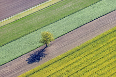 Single Tree - 01 (Aerial Photography) Tags: by mü obb 12052005 20d08487 7938128n ackerbau agrarlandschaft baum bavaria bayern blüte diagonale eiche einzelbaum feld feldweg fotoklausleidorfwwwleidorfde fotoklausleidorfwwwleidorfaerialcom frühling grafik grün haimbuch landscapeandnature landschaft landschaftnatur landwirtschaft laubbaum linien luftaufnahme luftbild p1 raps rapsfeld reihen schatten unterreit aerial agriculturallandscape agriculture canolafield colza deciduoustree diagonal field foliagetree graphicart graphics landscape landscapenature leaftree lines nature oak outdoor rape rapefield rows shade shades shadow shadows singletree spring tree unterreitlkrmühldorfainn deutschlandgermany