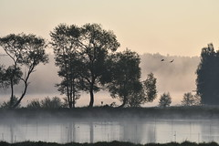 #moin (Florian Grundstein) Tags: moin ooc nofilter morning sunrise nikon dx apsc trees fog nature natural moody oberpfalz bayern