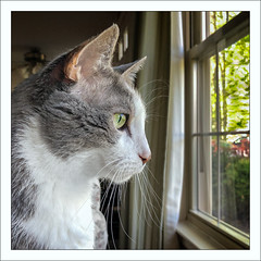 In the Garden of the Mind... (Timothy Valentine) Tags: 0519 window quinnomannion happycaturday datesyearss 2019 home cat eastbridgewater massachusetts unitedstatesofamerica