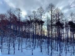 2019_01_30 09_35_59 (Yiwen103) Tags: 日本 滑雪 星野 磐梯山 溫泉 ski