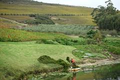 Stellenbosch (Jordan Barab) Tags: southafrica stellenbosch winery pond workers street streetphotography winecountry sonydscrx100markiii