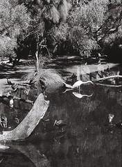 Wetlands 1 (adam_h_photo) Tags: halfframe olympuspenft monochrome film filmphotography 35mm analogue analog photofilmy ishootfilm istillshootfilm blackandwhite