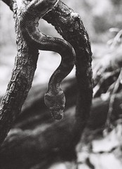 Snake (adam_h_photo) Tags: halfframe olympuspenft monochrome film filmphotography 35mm analogue analog photofilmy ishootfilm istillshootfilm blackandwhite snake