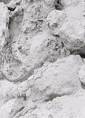 Reptile 1 (adam_h_photo) Tags: halfframe olympuspenft monochrome film filmphotography 35mm analogue analog photofilmy ishootfilm istillshootfilm blackandwhite