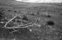 Death Valley (Grey Haze) Tags: leica m3 summicron 50mm ilford panf d76 11 greyhaze alex d