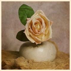 Still Life (DayBreak.Images) Tags: tabletop stilllife vase flower cheese cloth canondslr meyeroptic trioplan ringlight photoscape texture border home