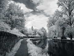 138-2019-365-(1234) River Wey (graber.shirley) Tags: riverwey infrared
