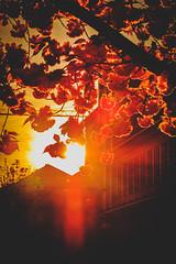 Bye (DOKTOR WAUMIAU) Tags: berlin fuji fujifilm fujigear fujilove fujix fujixt20 lightroom xt20 xf1855 xf1855mm sundown sunset dawn