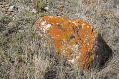 70 Mile Butte Trail, Grasslands - DSC_3377a (Markus Derrer) Tags: 70milebutte markusderrer grasslandsnationalpark grasslands saskatchewan may butte