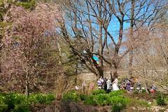 Wedding Day (thegardenshutterbug) Tags: annapolisroyal canada historicgardens location novascotia shutterbug weddings