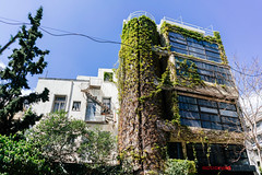 Building covered in plants (wuestenigel) Tags: athens building street exploration modern abandoned architecture house urban tower photography greenery crisis greece functional eu green tall athen attika griechenland haus gebäude diearchitektur family familie old alt sky himmel window fenster tree baum noperson keineperson travel reise home zuhause expression ausdruck outdoors drausen estate nachlass city stadt apartment wohnung exterior ausen wall wand wood holz summer sommer2019 2020 2021 2022 2023 2024 2025 2026 2027 2028 2029 2030