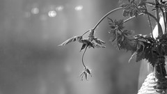 Good morning... (beatawozniak1968) Tags: stilllife monochrome bw creative inspiration morning moment details photography