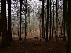 A local forest. (Speeesh) Tags: alone trees skov forest harlev danmark denmark