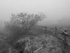 a foggy day in may in the Black Forest (2) (mgheiss) Tags: schwarzweis monochrom bw huaweip20pro schwarzwald blackforest nebel fog