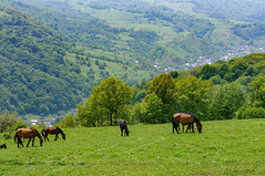sadkamney02 (tloster) Tags: садкамней rockgarden chegem чегемскоеущелье нижнийчегем кбр northerncaucasus mountains mountainbiking mtb