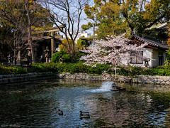 Osaka - Sanctuaire Sumiyoshi Taisha (Noti NaBox) Tags: osaka sanctuary sanctuaire sakura sumiyoshi taisha japan japon cerisier fleur nature