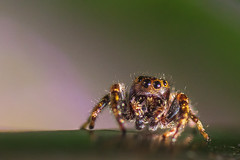 Spinne (Daborius B.) Tags: spider macro makro insect insekt