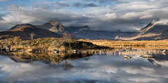 In Reflection (gcfotographos) Tags: scotland alba loch lochan glencoe rannoch light sunrise sun reeds water ngc nikon sky clouds mountains munro mon meallbeag trees rocks reflections landscape reflection vista moor uk britain europe
