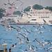 Seagulls on the Bosphorus in Istanbul, Turkey.