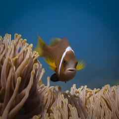 Pegion Island National Park Trincomalee (Chamikajperera) Tags: srilanka diving underwater photography fish animals blue ceylon wildlife nemo clown nudibranch coral color
