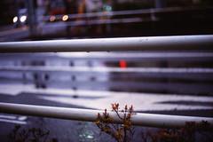 ガードパイプ (frenchvalve) Tags: 雨 ガードパイプ 道路標示 rain film filmphotography analog 35mm