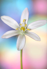Pastel Sky (dianne_stankiewicz) Tags: hmm macromondays pastel sky flower macro nature plant petals pollen