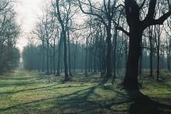 Zorki 6 (camera_holic) Tags: zorki 6 rangefinder soviet russian old 35mm film camera industar 50 lens kodak color plus 200 expired badminton swangrove wood woods spring haze morning mist tree sun sunlight
