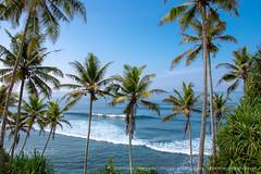 IMG_7210.jpg (Dhammika Heenpella / CWSSIP Images of Sri Lanka) Tags: dhammikaheenpella මිරිස්ස clusterofcoconuttreesbythesea ශ්රීලංකාවේචායාරූප ධම්මිකහීන්පැල්ල coconuttreehill ශ්රීලංකාවේෆොටෝ imagesofsrilanka srilanka mirissa කොකනට්ට්රීහිල් ශ්රීලංකාව traveldestination placesofinterest