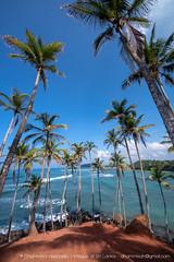 IMG_7295.jpg (Dhammika Heenpella / CWSSIP Images of Sri Lanka) Tags: dhammikaheenpella මිරිස්ස clusterofcoconuttreesbythesea ශ්රීලංකාවේචායාරූප ධම්මිකහීන්පැල්ල coconuttreehill ශ්රීලංකාවේෆොටෝ imagesofsrilanka srilanka mirissa කොකනට්ට්රීහිල් ශ්රීලංකාව traveldestination placesofinterest