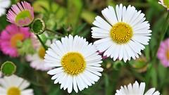 Chiribitas (eitb.eus) Tags: eitbcom 30487 g1 tiemponaturaleza tiempon2019 flora bizkaia portugalete juantxuaberasturi