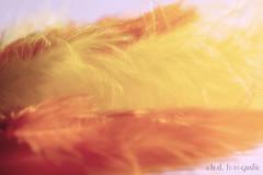 Macro Mondays - Pastel (benno.dierauer) Tags: macrounlimited macro macromondays feather pastel feder canoneosr tamronsp90mmf28dimacro11vcusd tabletop