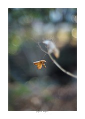 2019/3/9 - 14/21 photo by shin ikegami. - Lomography New Jupiter 3+ 1.5/50 L39/M (shin ikegami) Tags: sony ilce7m2 sonyilce7m2 a7ii 50mm lomography lomoartlens newjupiter3 tokyo sonycamera photo photographer 単焦点 iso800 ndfilter light shadow 自然 nature 玉ボケ bokeh depthoffield naturephotography art photography japan earth asia