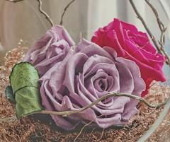 v (Vostok 911) Tags: macromondays thème pastel youri fujix20 fleurs rose