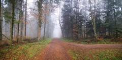 IMG_20190415_093315 (eduard43) Tags: waldweg fog nebel wald forest baum trees 2019 rafz
