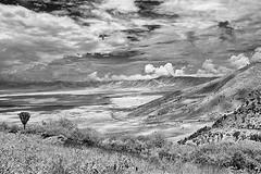 TANZANIA 15 (Nigel Bewley) Tags: tanzania africa wildlife nature wildlifephotography nigelbewley photologo appicoftheweek safari gamedrive sky clouds blackandwhite march march2019 canonef1635mmf28lusm canon5dmkii 830nm infrared digitalinfrared advancedcameraservices blackwhite creativephotography artphotography ngorongoro
