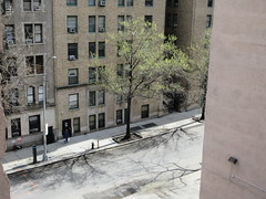 Tiny Green Spring Leaves on Tree 45th St NYC 6083 (Brechtbug) Tags: tiny green spring leaves tree 45th street between 8th 9th avenues looking out front window nyc 04152019 small shadow weather car parking lot hell s kitchen clinton new york city midtown manhattan 2019 leaf growing sunlight