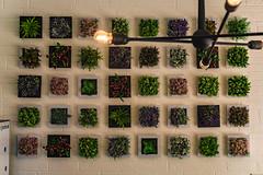 Flower Wall-2 (latinkidd98) Tags: flower wall artsy square plant plants sony alpha a6000 6000 30 30mm 50 50mm sigma 14 18 f14 f18