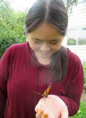 Releasing a Butterfly 3 Days After Mom Died (Pictures by Ann) Tags: releasing butterfly monarch tradition familytradition science biology homeschool homeschooling education joy bittersweet newlife symbolism symbol sophia