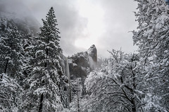 Yosemite National Park, California (paccode) Tags: solemn california d850 landscape winter nationalpark yosemite serious snowstorm quiet tree waterfall snow yosemitenationalpark unitedstatesofamerica