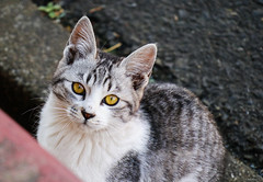 stray cat (Christine_S.) Tags: cat kitten chat japan neko canon m5 mirrorless eos cute