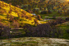 The place where I wanted to stay for a long time. (Eunice Eunjin Oh) Tags: spring wildflowers california sunset trees barn