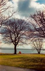 Fujica st801 kodakPlus; At Lake Ontario (Uta_kv) Tags: fujinonlens filmcamera slr 35mmfilm fujicast801 kodakcolorplus