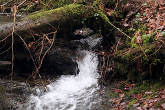 IMG_2008 (Simon M Hendry) Tags: unitedkingdom wales tanycoed forest river waterfall machynlleth corris winter