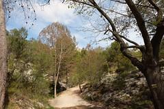 ED:DA190307.XT   ¡ (DAVID.gv65) Tags: selección david65 color chrome alcoi piedra natural montaña arboles natur dgvalor photodgv