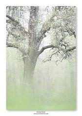 Douceur du printemps ... (jeremie.brion) Tags: arbre nature printemps forêt